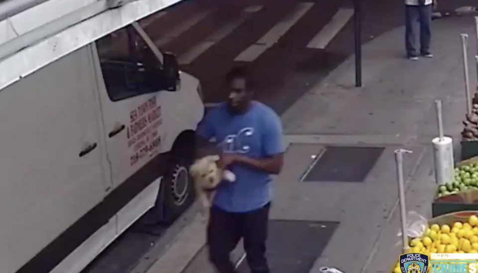 Pup Stolen From Outside Of Brooklyn Bodega Is Reunited With His Owner