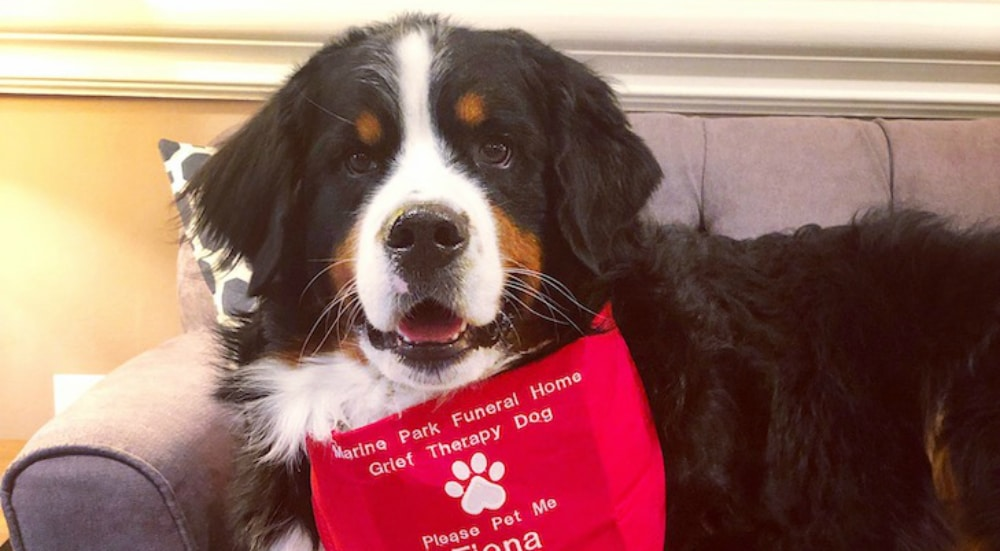 """This NYC Pup Just Became The Millionth Dog To Receive Her """"Canine Good Citizen"""" Certification"""