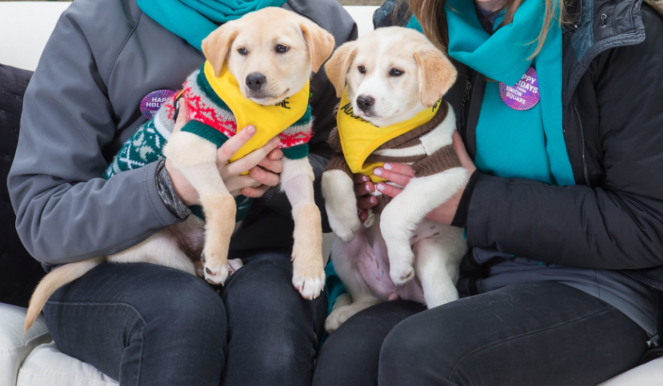 Snuggle (& Get Pics!) With The Cutest Puppies At Union Square This Weekend