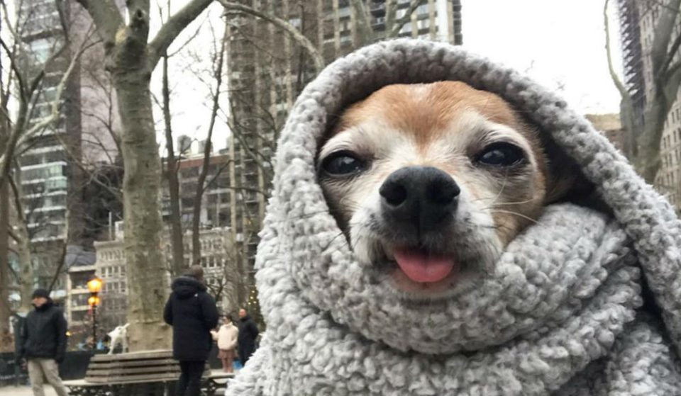 These Are The Cutest Photos Of NYC Dogs Bundled Up In The Winter Cold