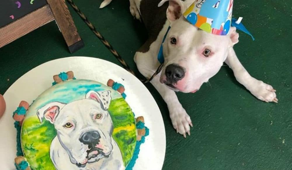 This Brooklyn Bakery Will Make A Birthday Cake With Your Dog's Face On It (That They Can Eat!)