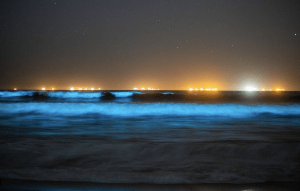 A Huge Red Tide Is Bringing A Spectacular Display Of Bioluminescence To SoCal Beaches