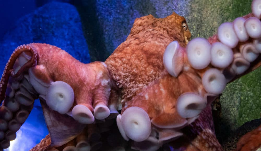 The New York Aquarium Has Launched Live Webcams Of Its Shark & Giant Octopus Tanks