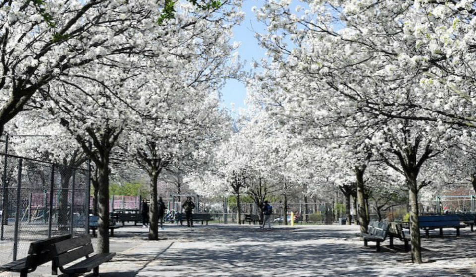 These Live Video Tours Of NYC Parks In Bloom Are The Springtime Escape We All Need