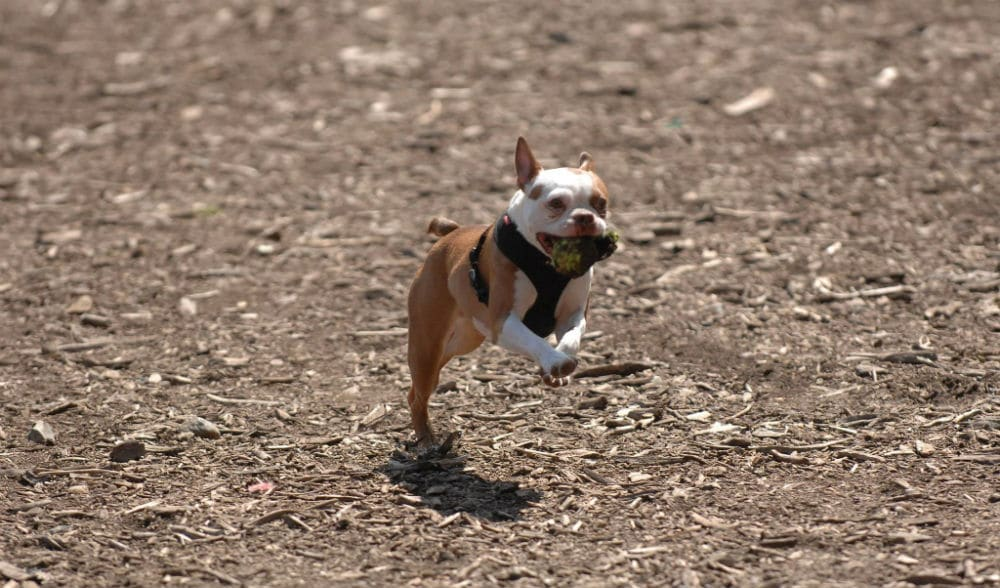 All NYC Dog Runs And Dog Parks Are Now Closed Until Further Notice