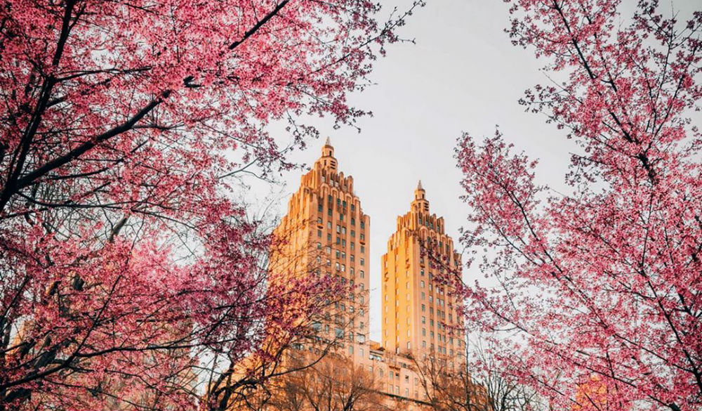 Here Are 10 Beautiful Photos Of Cherry Blossoms Currently Blooming On NYC Streets