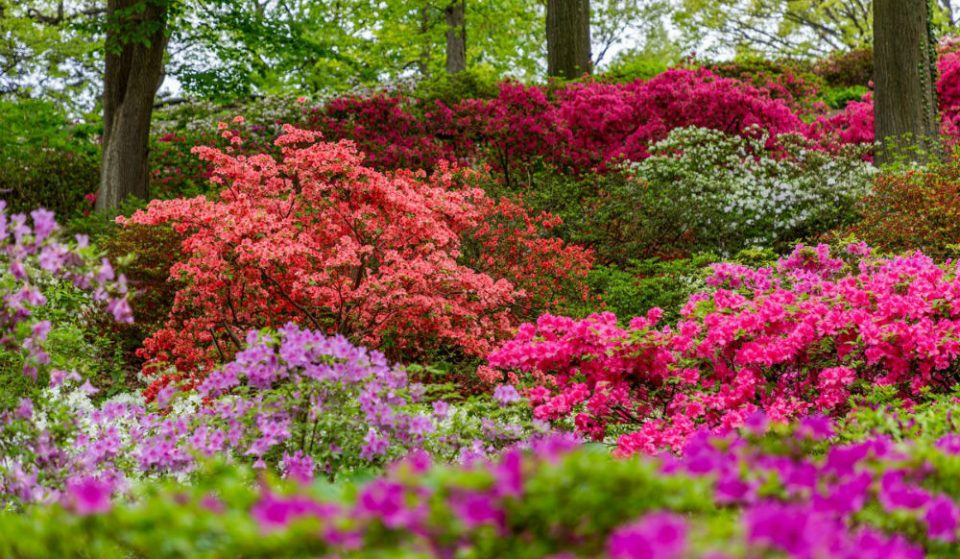 The New York Botanical Garden Is Hosting A Beautiful Virtual Garden Party This Weekend