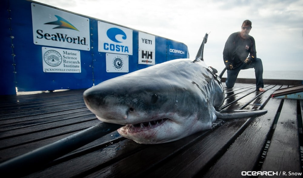 A Great White Shark Was Tracked Off NJ Coasts This Week, & It's Headed To Montauk Next