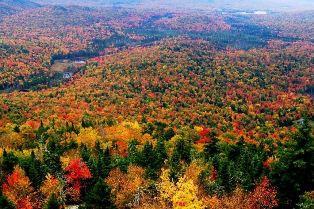 5 Best Places To Catch The Changing Fall Foliage In New York State