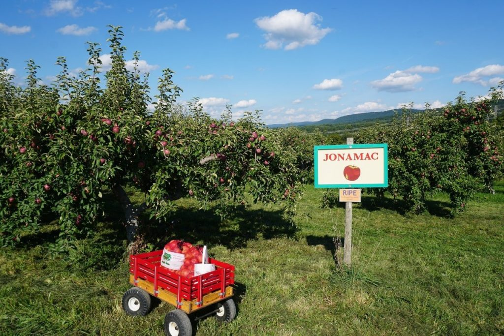 10 Best Orchards For Apple Picking Near New York City