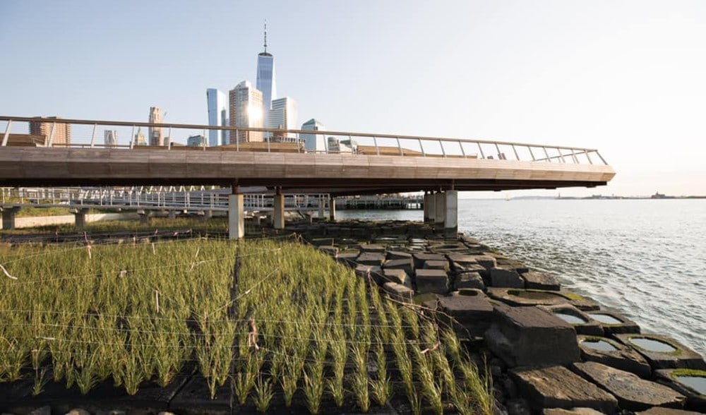 This New Pier In Tribeca Has The Best Waterfront Views & A 'Tide Deck' For Marine Wildlife