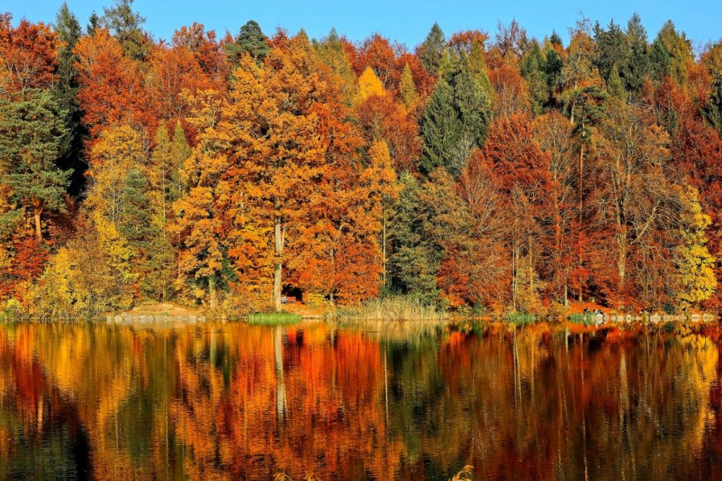 This Map Shows Exactly When All The Prettiest Fall Foliage In NY Will Peak
