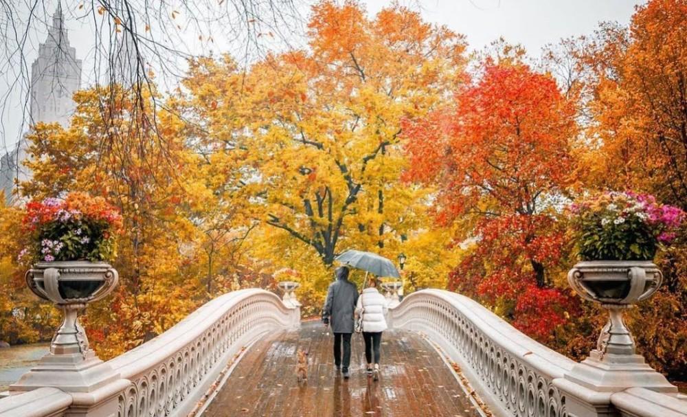 16 Best Spots To Catch NYC's Peak Fall Foliage
