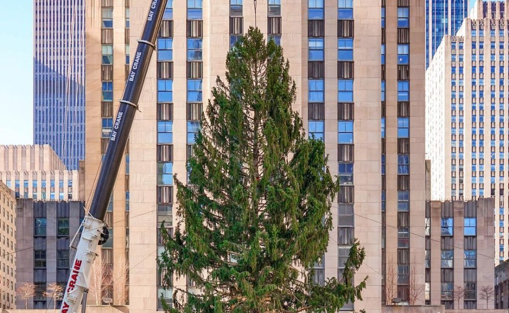 See Photos Of This Year's Massive Christmas Tree Going Up In Rockefeller Center
