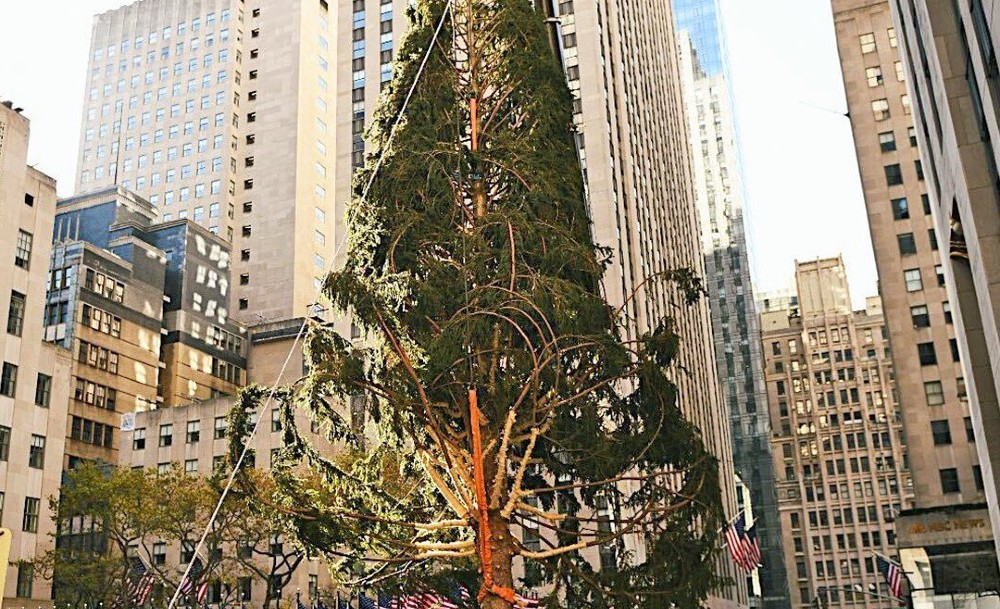 New Yorkers' Best Reactions To This Year's 'Slimmer' Rockefeller Center Christmas Tree