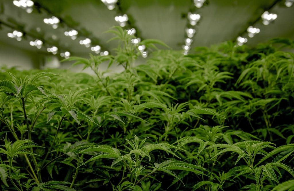 Recreational Marijuana Is Now Legal In New Jersey