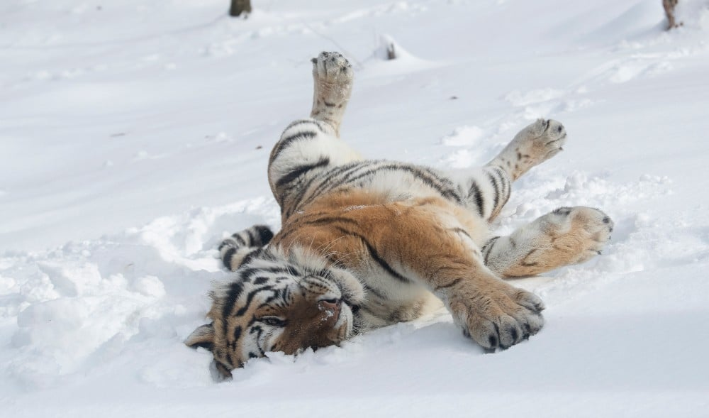 See The Bronx Zoo's Adorable Animals Having A Blast In This Week's Snow