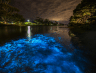 You Can Cruise Through Magical Neon Blue Waters At This National Park Just An Hour From Orlando