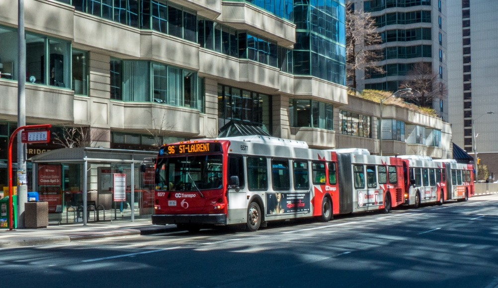 Turkey Attempts To Hop On Ottawa Bus Before Thanksgiving