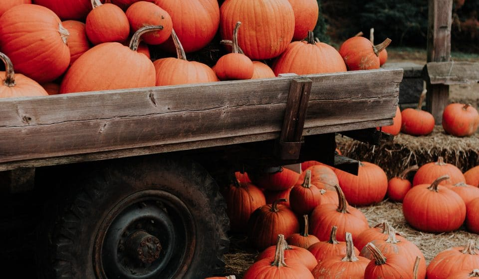 The 5 Best Pumpkin Patches Near Ottawa To Visit Before Halloween