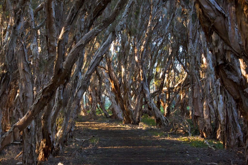 7 Wonderful Perth Walks To Put Spring In Your Step