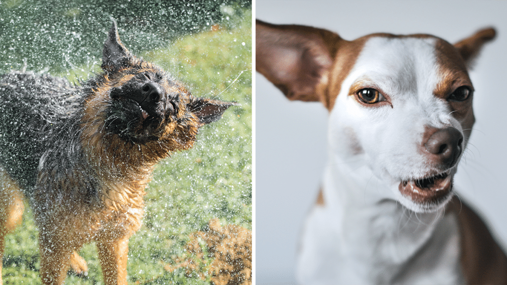 The 'Unflattering Dog Photo Challenge' Is Taking Over Social Media And The Photos Are Hilarious