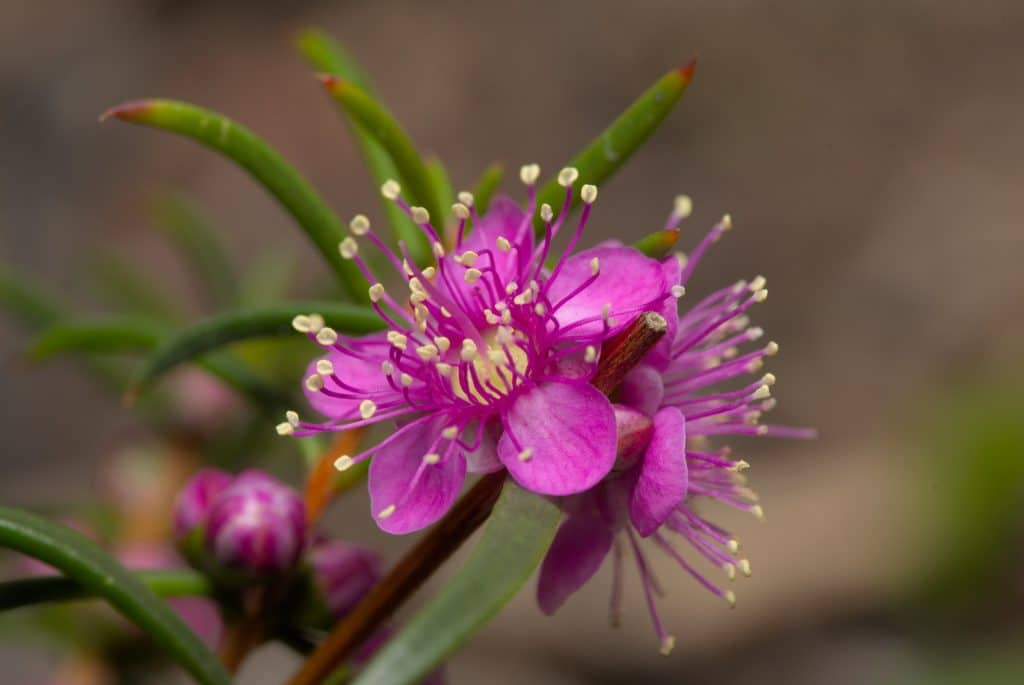 Go For A Walk On The Wild Side At The Reynoldson Reserve Wildflower Festival