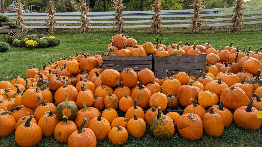 5 Awesome Pumpkin Patches To Check Out This Fall Around Philadelphia