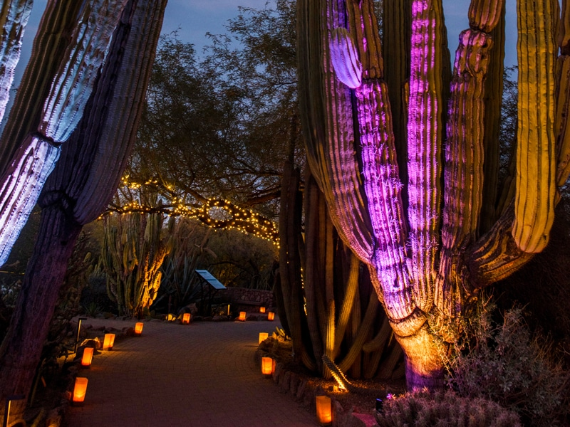 Stroll Through Magical Botanical Gardens Glowing With Thousands Of Lights At Las Noches De Las Luminarias