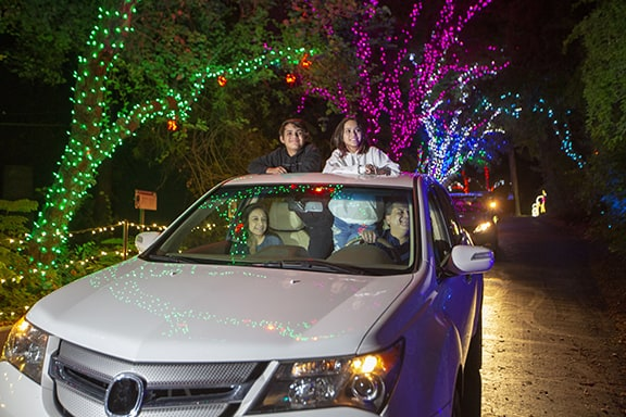 Walk (Or Drive) Through Millions Of Glittering Lights And Enchanting Animal Sculptures At Phoenix Zoolights