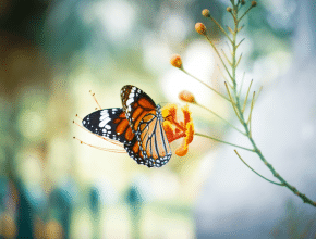 Walk Among Thousands Of Live Butterflies At This Immersive Arizona Experience