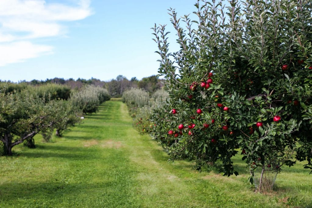 Pick Apples This Weekend At This Orchard Close To Phoenix
