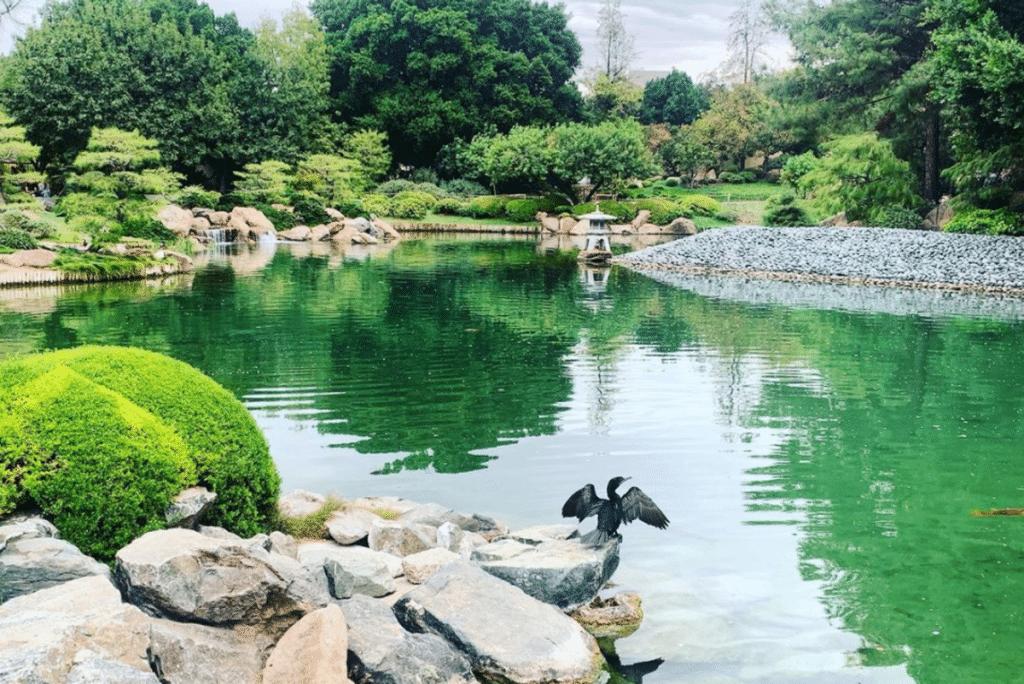 Find Your Zen At The Japanese Friendship Garden Of Phoenix