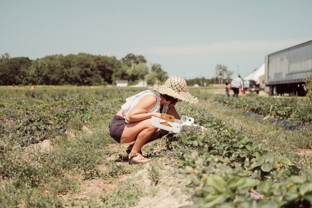 Pick Your Own Strawberries At Mortimer Farm Festival This Weekend