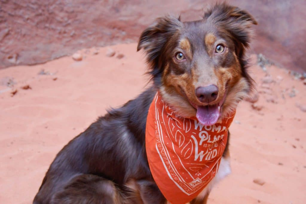Dogs Will Be Allowed In The Desert Botanical Garden On Specific Days