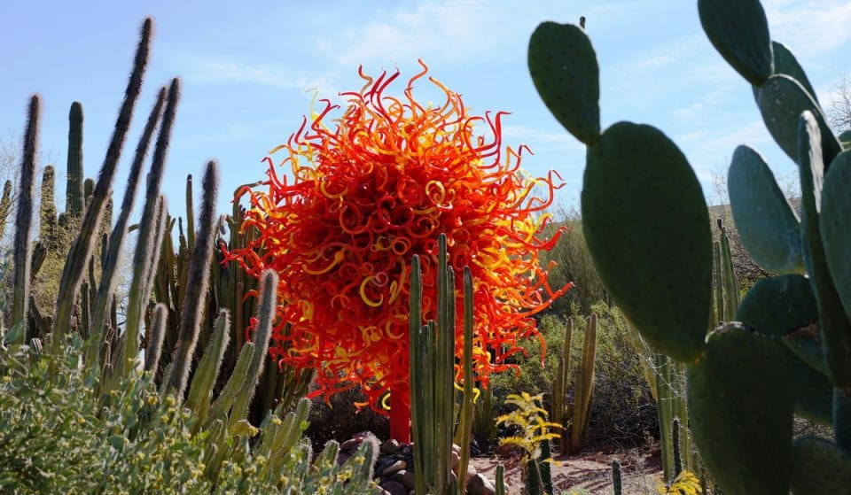 """Tickets For """"Chihuly In The Desert"""" Are Now On Sale"""