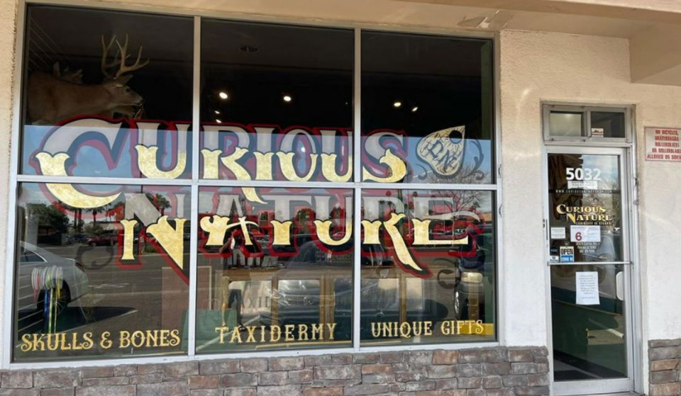 This Curious Phoenix Store Sells Everything From Raccoon Skulls To A Ouija Board