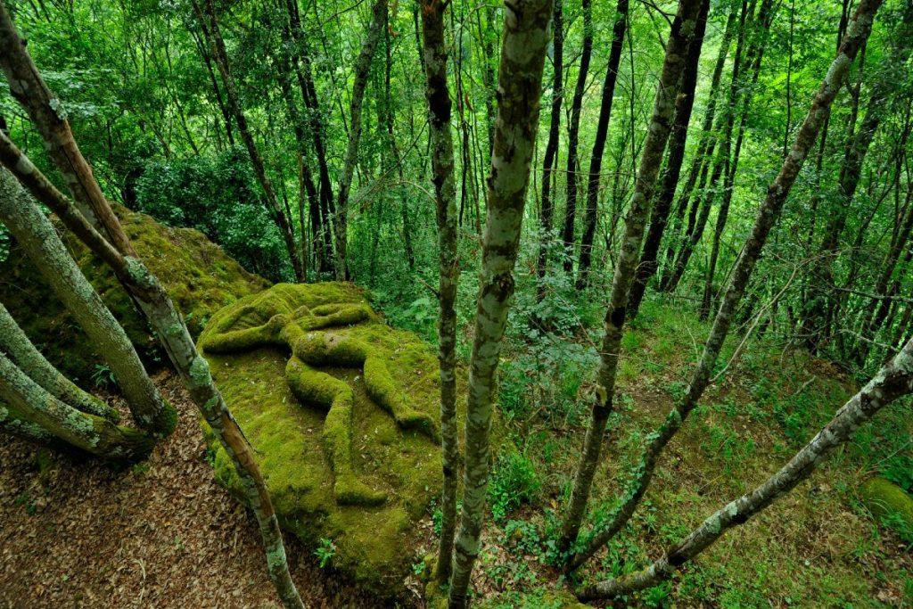 calcata bosco