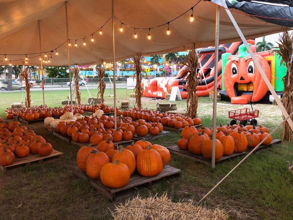 Get Your Spook On At This Awesome Halloween-Themed Pumpkin Patch In La Jolla