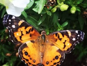 This Dreamy Butterfly Farm Is The Perfect Summer Sanctuary