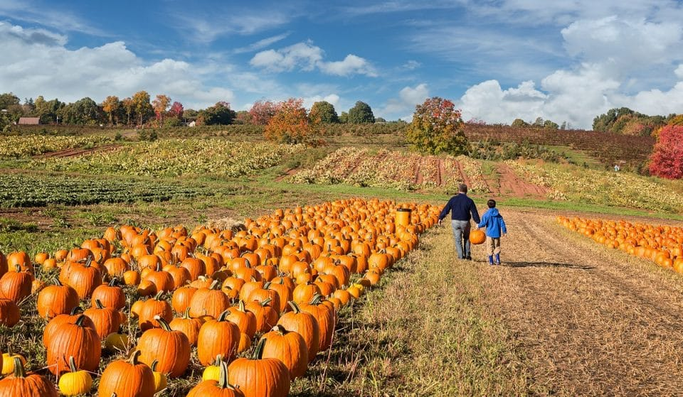 This Dreamy SoCal Pumpkin Patch Opens This Weekend
