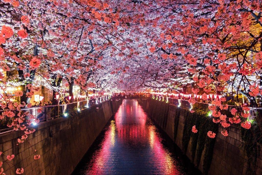 vr cherry blossom