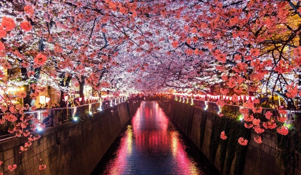 Experience The Bliss Of Cherry Blossom Season With These 360° Videos
