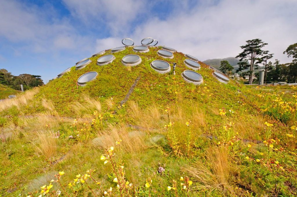 5 Of The Most Unique Gardens In San Francisco