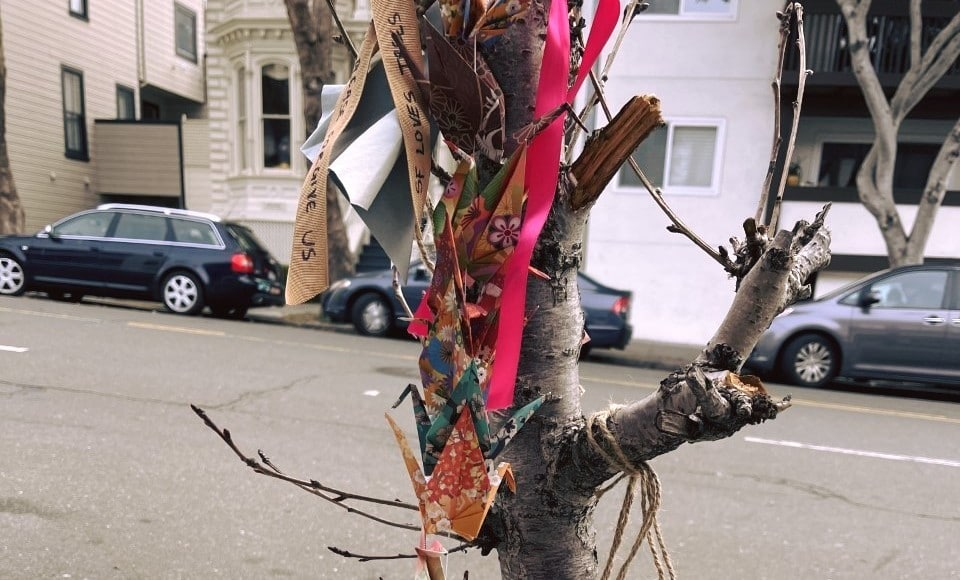 $30k Raised To Replace Japantown's Destroyed Cherry Blossom Trees