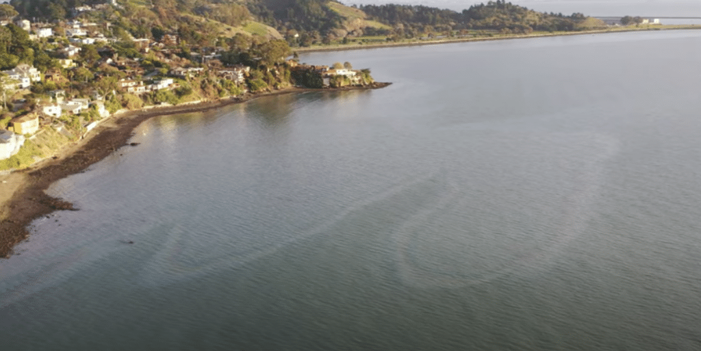 """""""We Cannot Tolerate A Single Drop Of Oil In Our Bay,"""" Says CA Assemblywoman Buffy Wicks"""