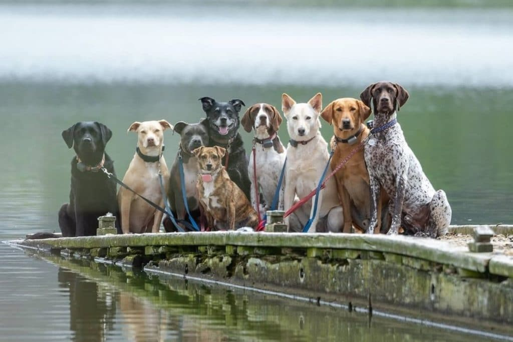 This SF Dog Walker Takes Pics Of The Pack Wherever They Go