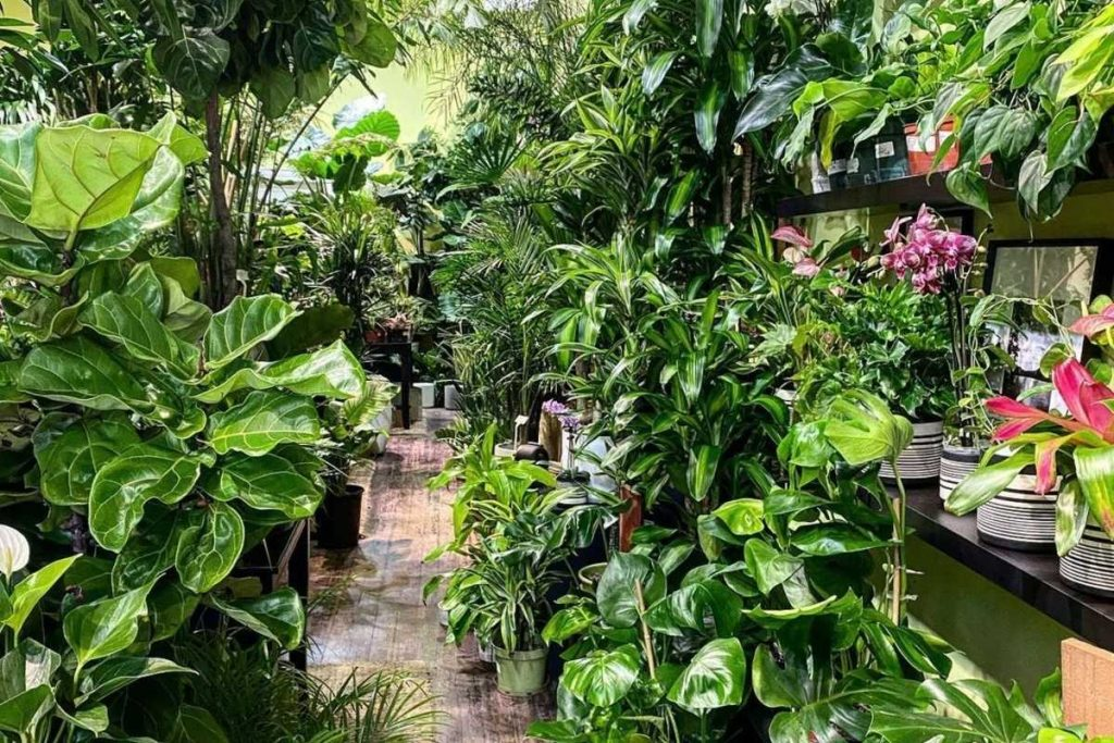 10 Dazzling SF Nurseries Where You Can Find Your Next Plant Children