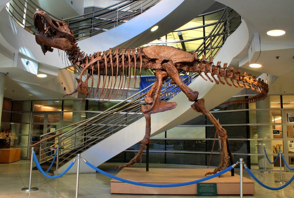 This T. Rex Skeleton At UC Berkeley Is One Of The Most Complete Ones To Date