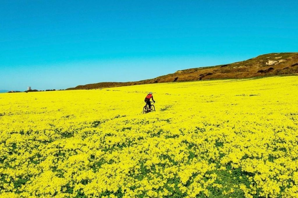 This Epic Wildflower Superbloom Is Still Happening In Davenport